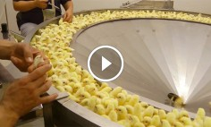 This Will Disgust You The Next Time You Eat Chicken Meat In McDonald's.