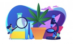 Cannabis in Canada Marijuana Legislation by Province