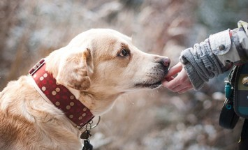 Three Awesome Benefits of CBD for Pets