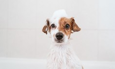 5 Tips For Buying Pet Shampoo That Will Improve Their Coat