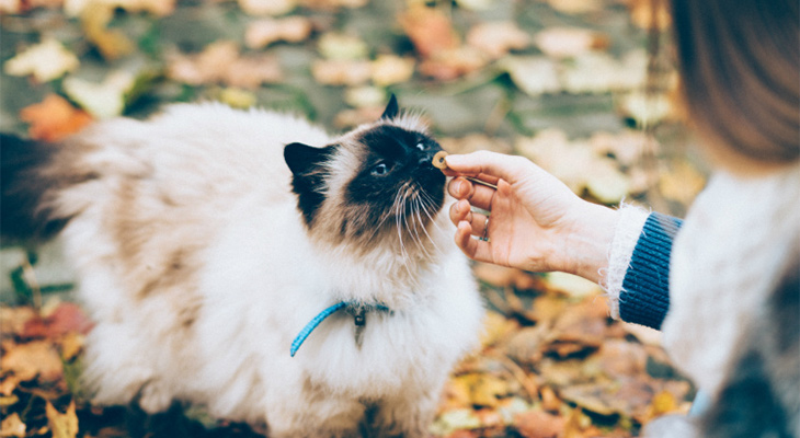 Treats To Your Cat